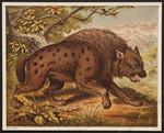 [The hyænas].
