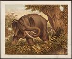 [The elephant].