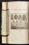 Illustration of Eclogue V. [Lines 65 - 66].