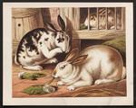 [Rabbits].