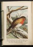 Robin Redbreast 6.