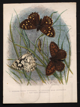 1. Marbled White Butterfly. 2. Speckled Wood Butterfly. 3. The Wall Butterfly.