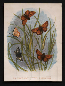 1. Grizzled Skipper Butterfly. 2, 2a. Large Skipper. 3. Small Skipper. 4. Brown Argus.