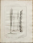 The Sugar Cane, in its four different Stages.