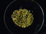 Placer Gold panning samples. Klondike, Yukon. :: Èchantillons de lor placèrien. Klondike, Yukon.