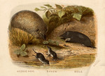 The mole, the hedgehog, and the shrew.