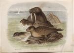 Whale. Walrus. Seals.